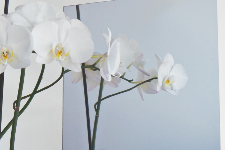 Specchio argento sintetico for Lastre vetro sintetico